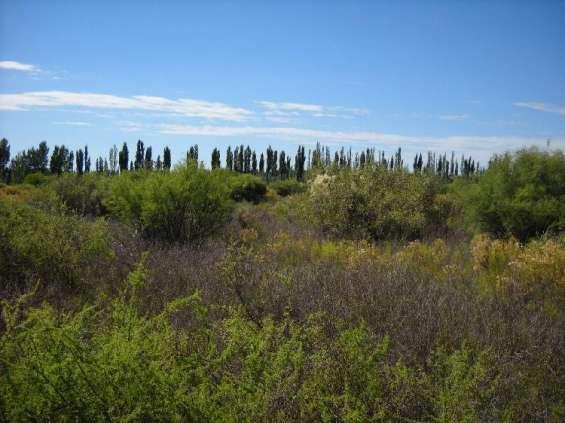 Campo 746 hectáreas en santa rosa mendoza
